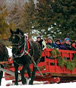Traverse City Hotel - Cherry Capital Winter Wonderfest
